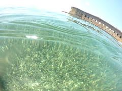 seagrass_48181527327_o