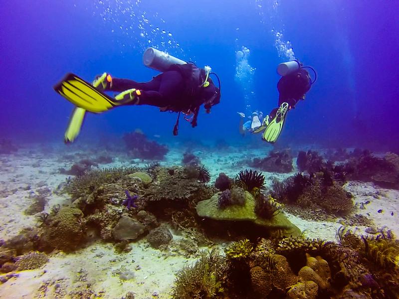 Black Forest Dive site