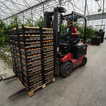 51162-001: High-Efficiency Horticulture and Integrated Supply Chain Project in Armenia