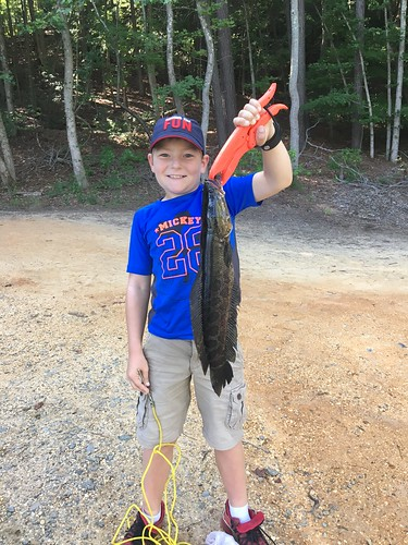 Photo of Boy with a snakehead he caught