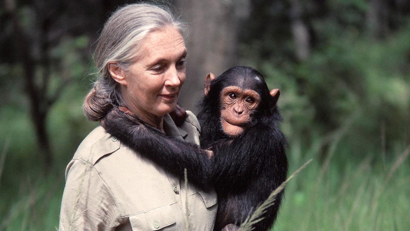Szegedre jön Jane Goodall