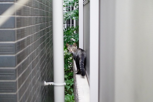 Today's Cat@2019-07-26