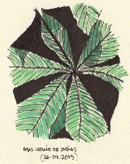 Castaño de Indias (Aesculus hippocastanum)