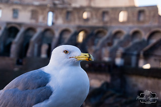 Omnium rerum principia parva sunt.  #coliseo #coliseum #anfiteatro #gaviota #romano #ciudad #city #roma #italia #sombras #shadow #turismo #tourism #viajar #travel #paisaje #landscape #photography #photographer #inspired_by_colour #MiFotoDR #sonyimages #so