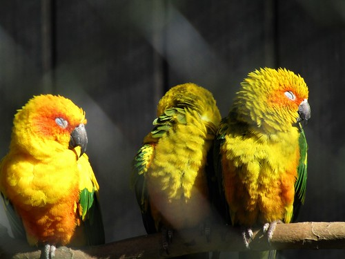 Colorful birds in Planckendael Zoo in Mechelen