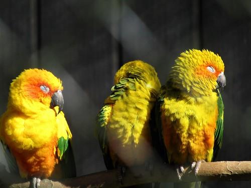 Colorful birds in Planckendael Zoo in Mechelen