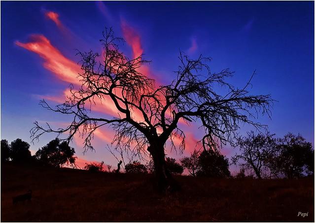 El viejo árbol al atardecer