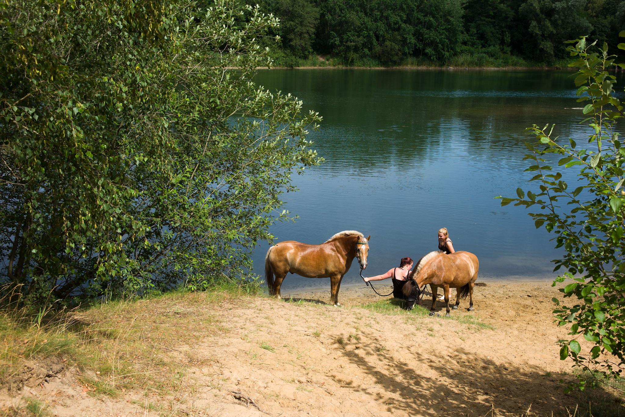 kremperheide-pferde