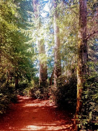 trees vashonisland washington landscape forest woods nature path outdoors