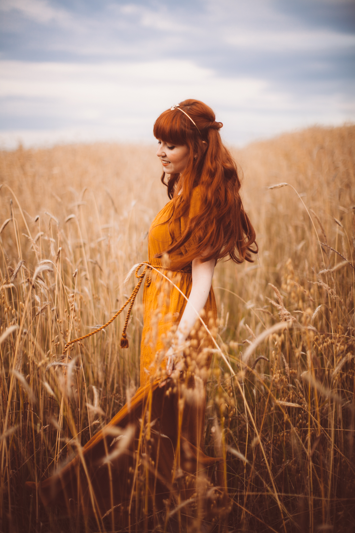 golden wheat field-66