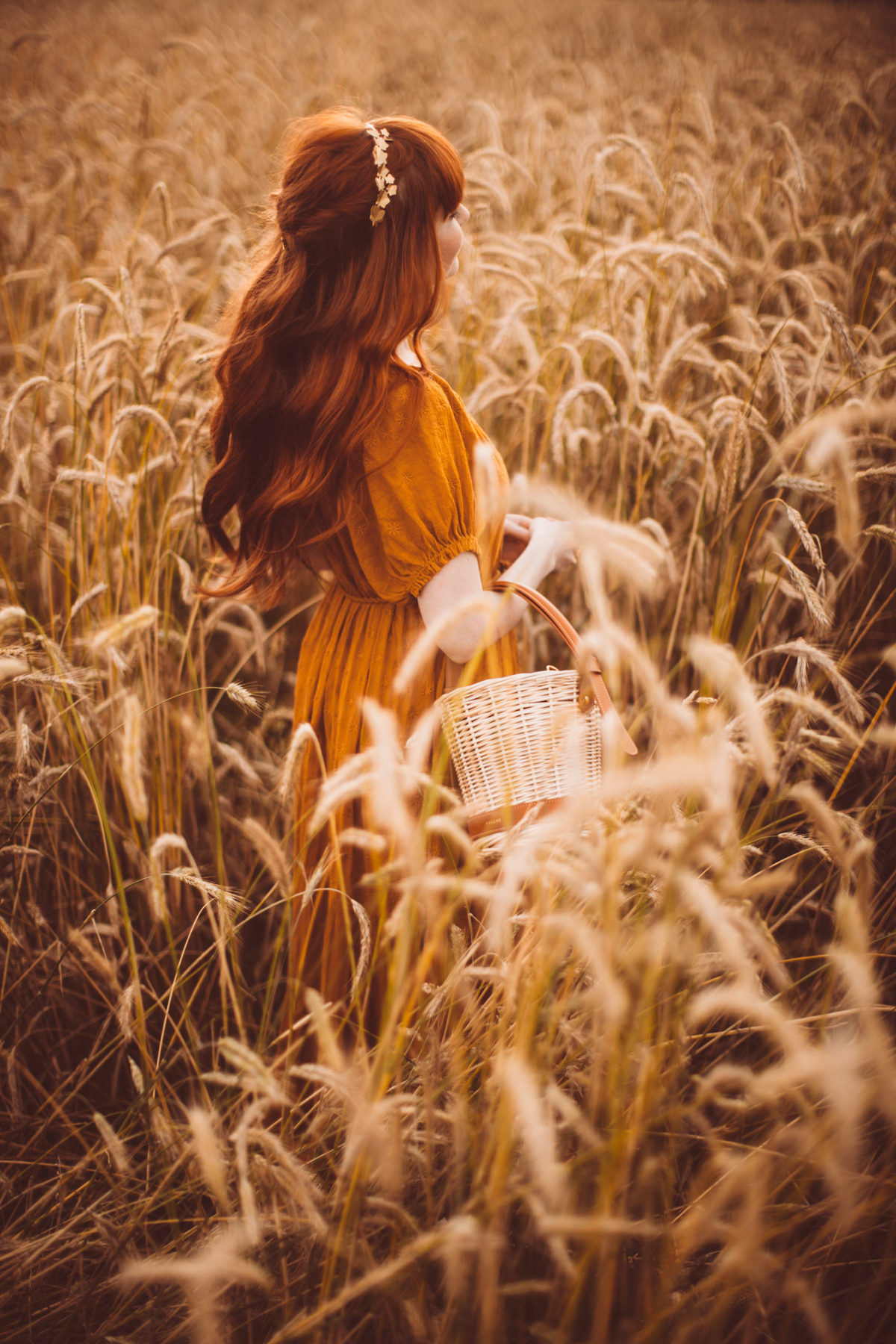 golden wheat field-29