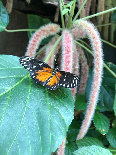 Butterfly Conservatory, Niagara Falls, Canada #travelblogger