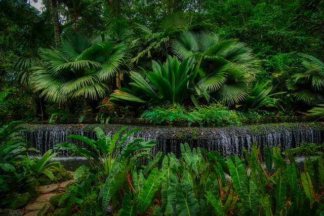 Water feature in the Botanical Gardens of Singapore
