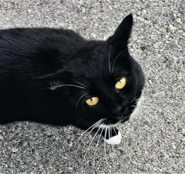 Cat #9