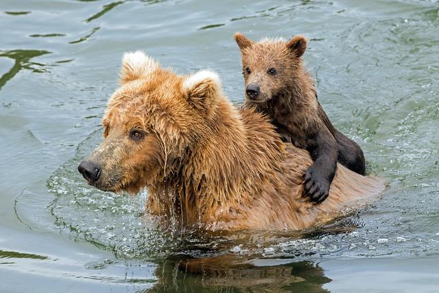 Backpack Bear [Explore]