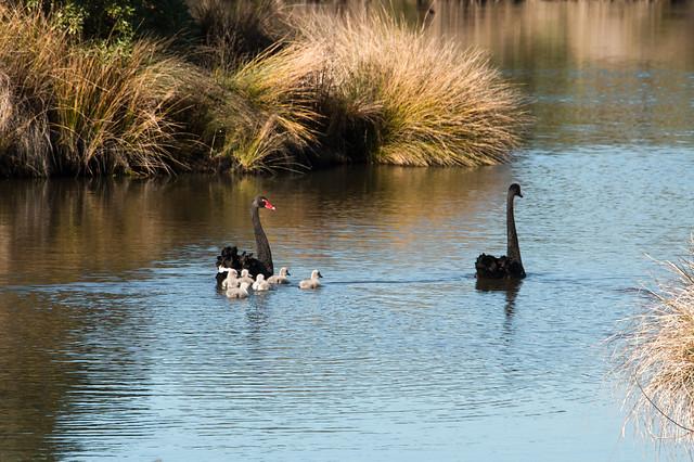 wetlands # 1