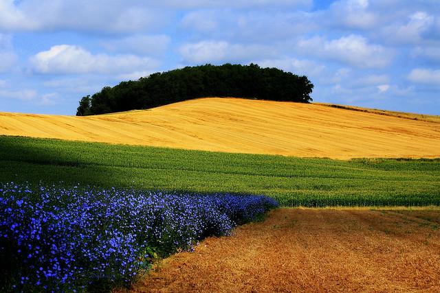 L'agriculture selon Euclide
