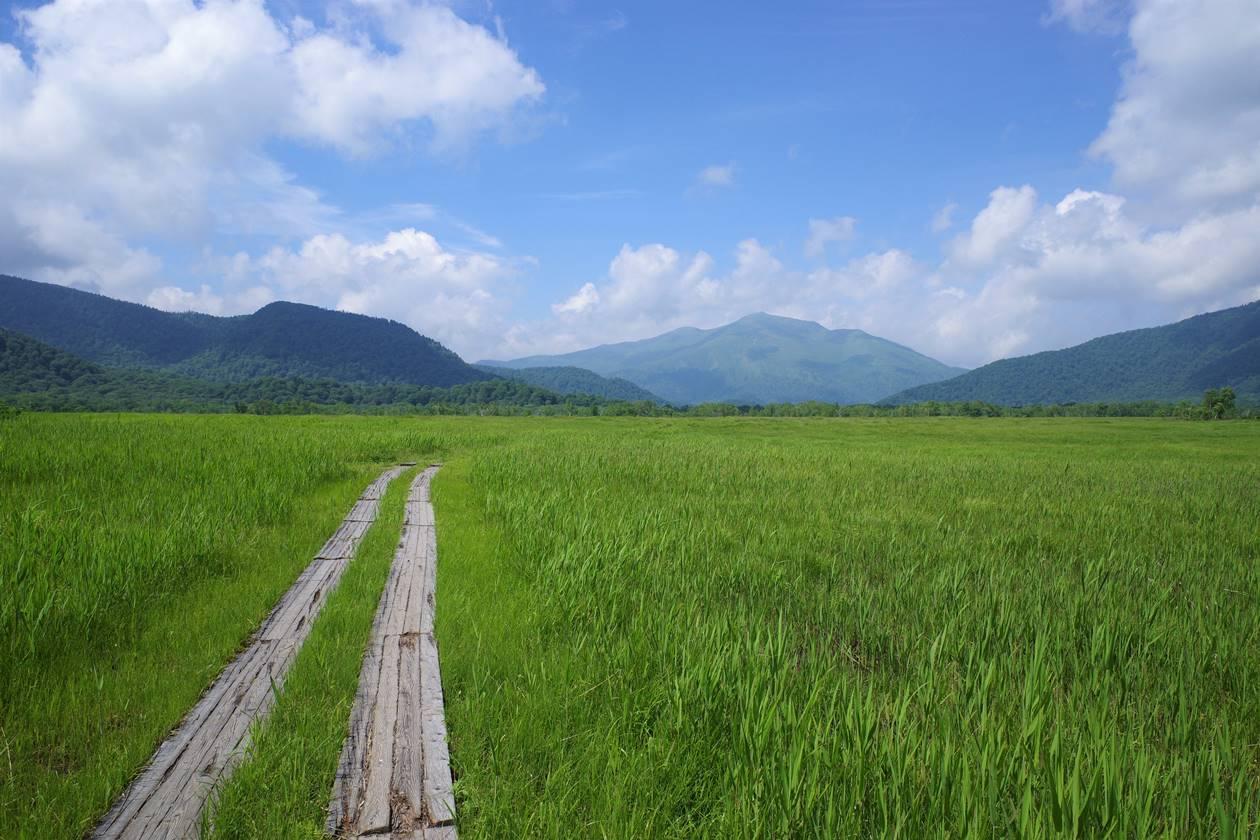 尾瀬ヶ原の草原