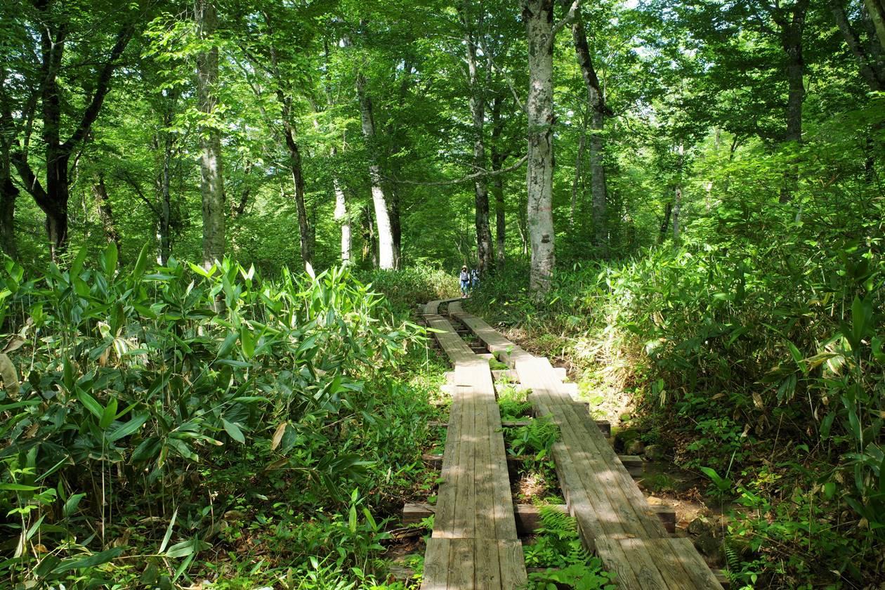 尾瀬の木道路
