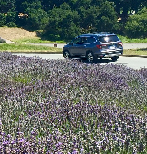 2019 HONDA PILOT/LAVENDER FIELD CARMEL VALLEY RANCH Photo