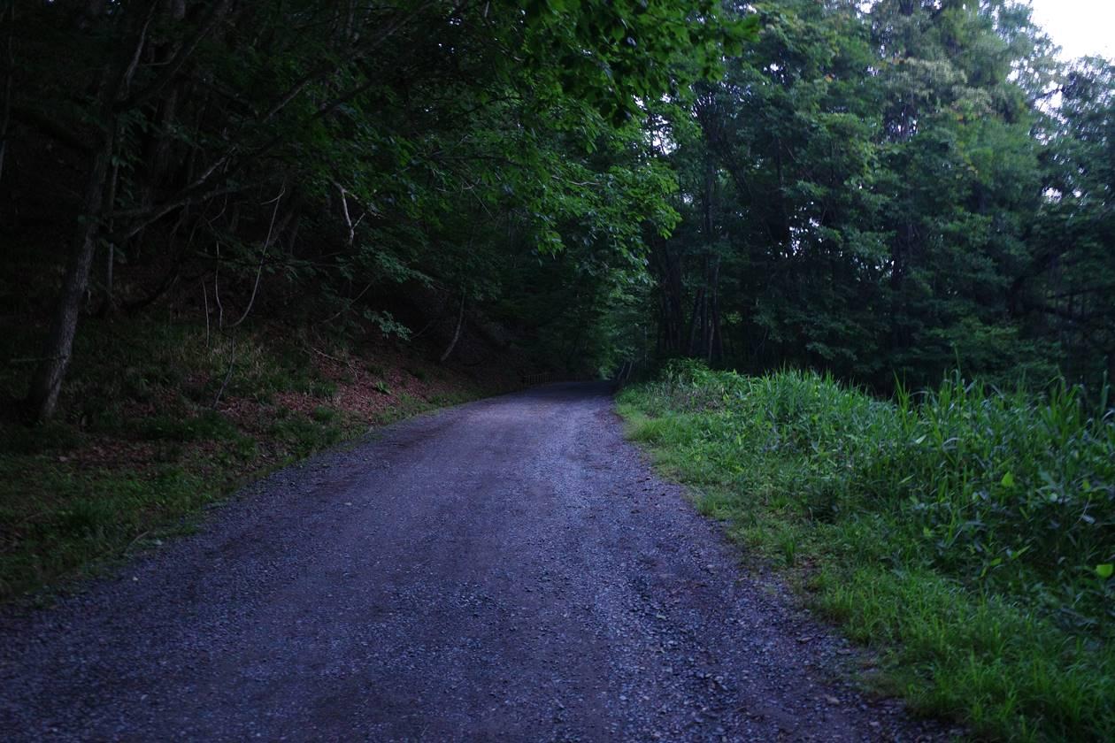 大清水からの林道歩き(沼田街道)