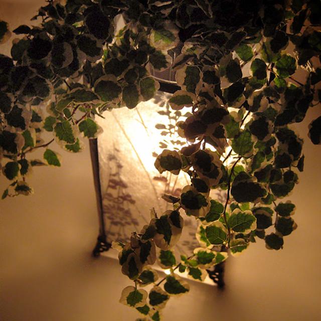1080x1080 Ficus pumila