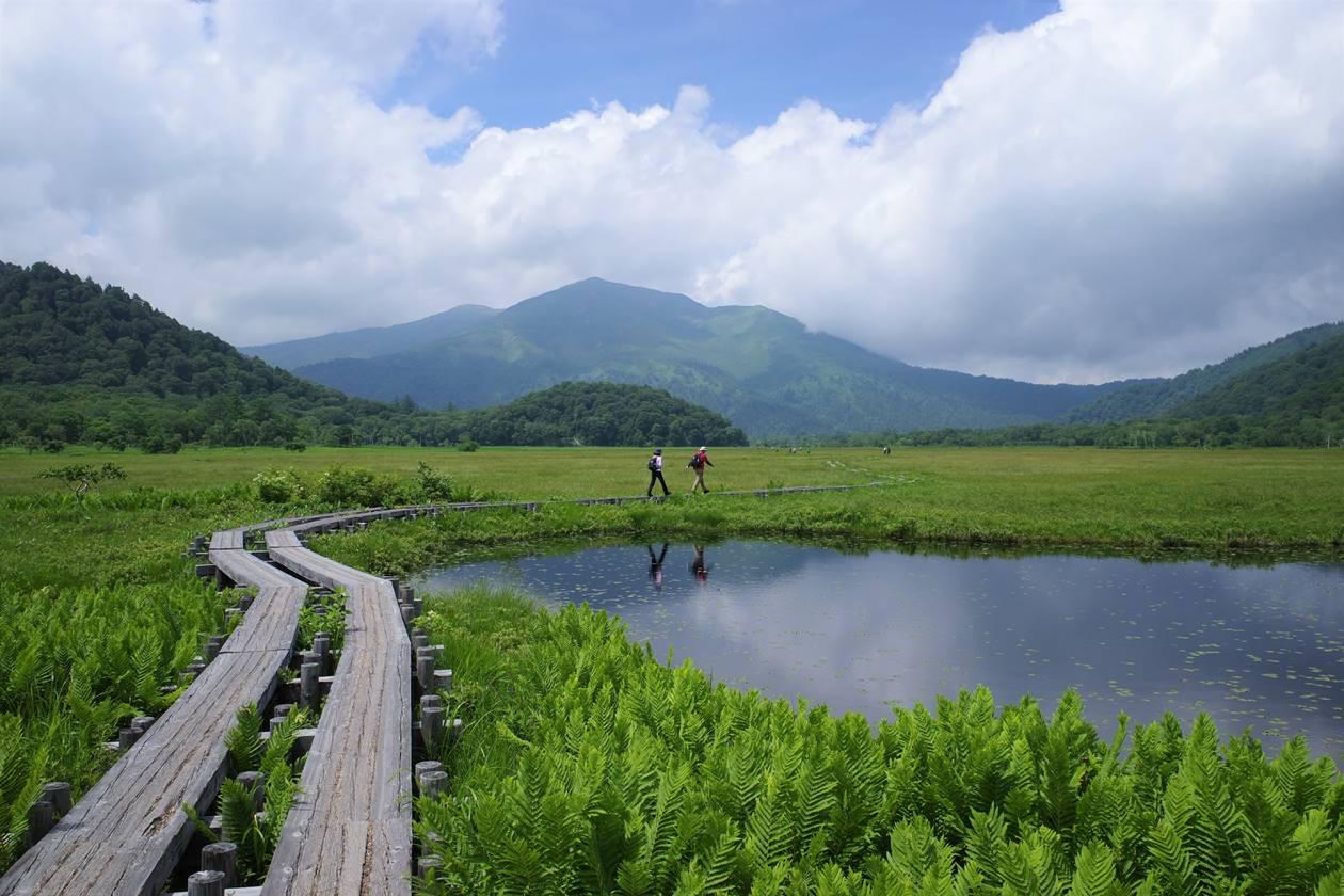 尾瀬ヶ原 湿原と木道