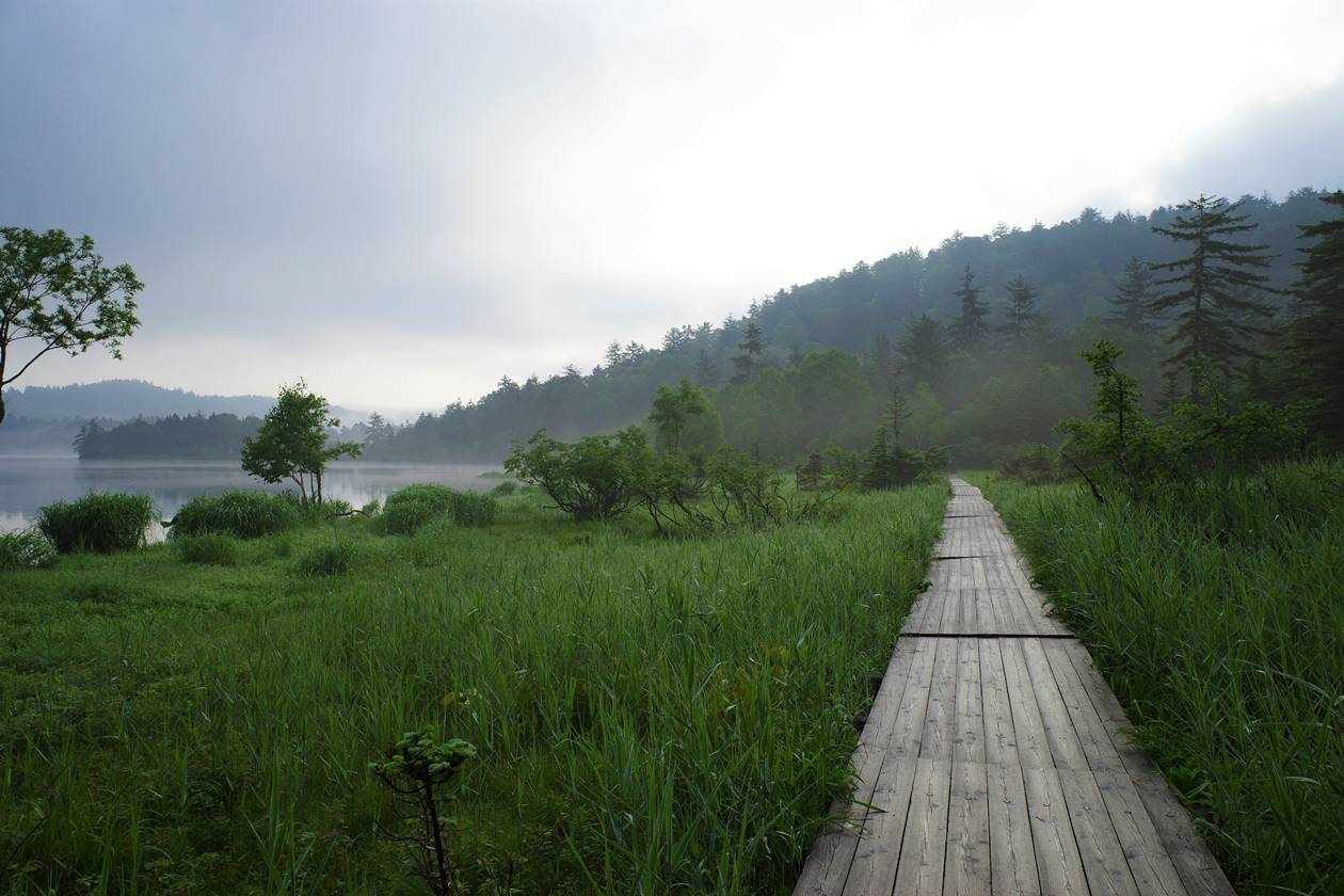 尾瀬沼周回の木道路
