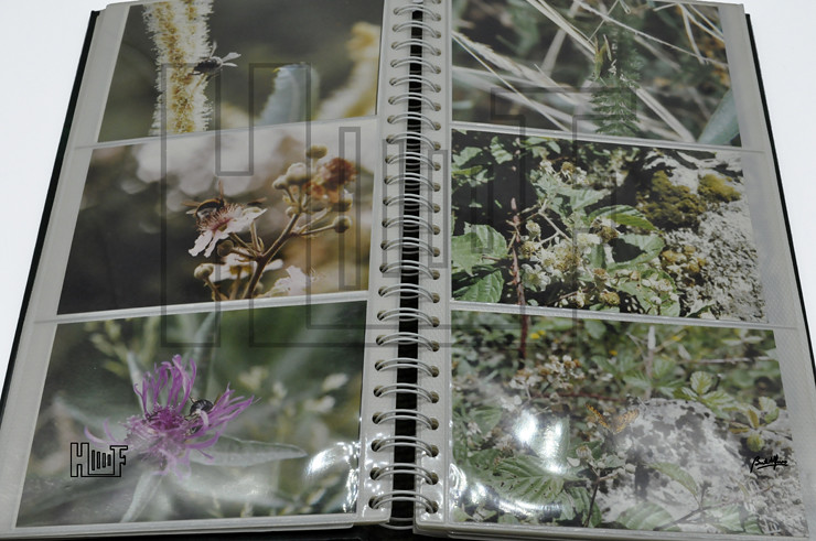 _DSC9209 Álbum com 56 fotografias a cores 15 x 10 cms
