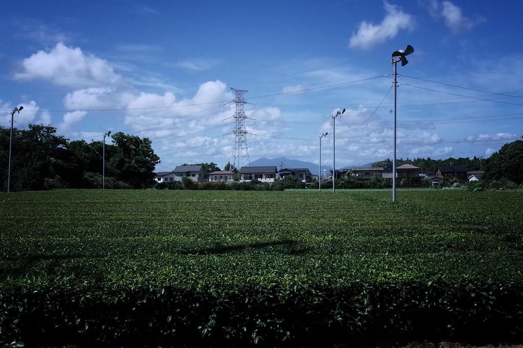 Tea garden in Tsukuba