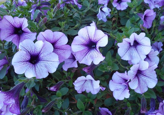 Summer Flowers 06