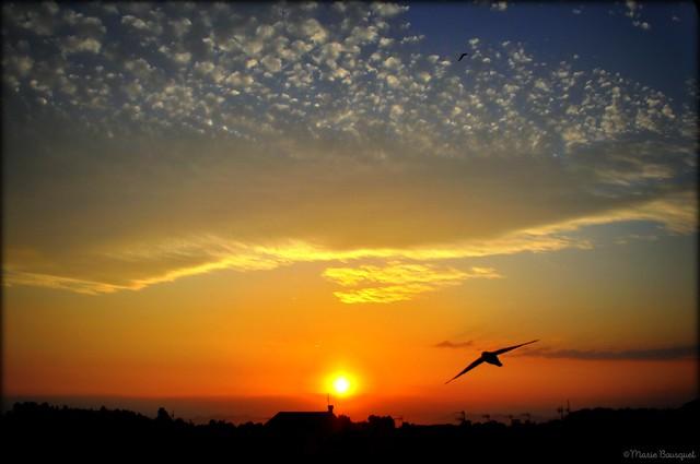 Vol d'hirondelle au coucher de soleil sur le village