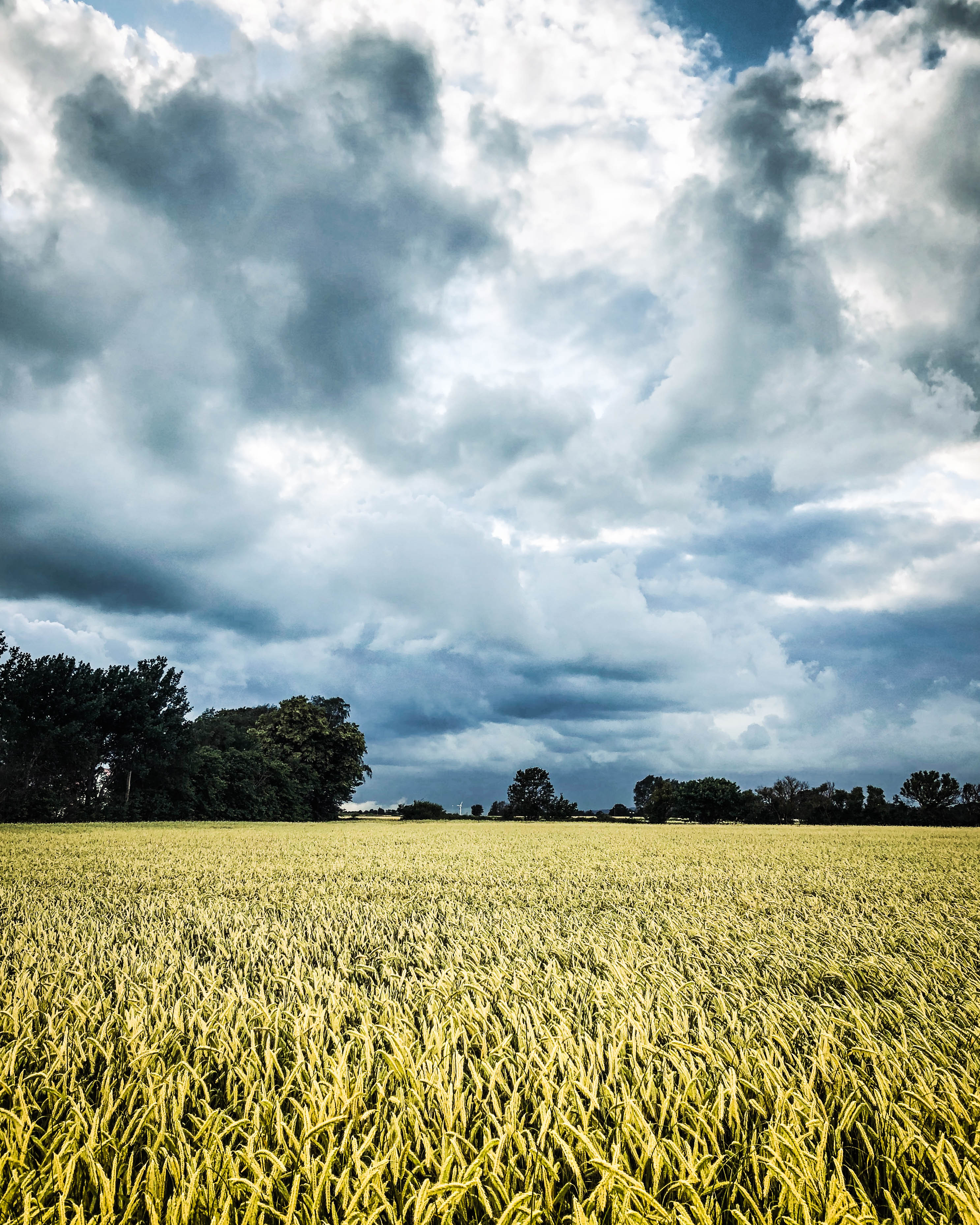 summer fields SW Sweden.jpg