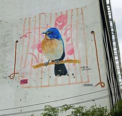 Blue Bird by Drain & Arre VRS