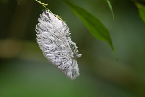 Weird caterpillar