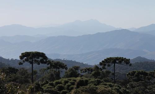 Pico dos Marins e araucárias