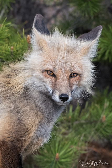 Foxy guy!