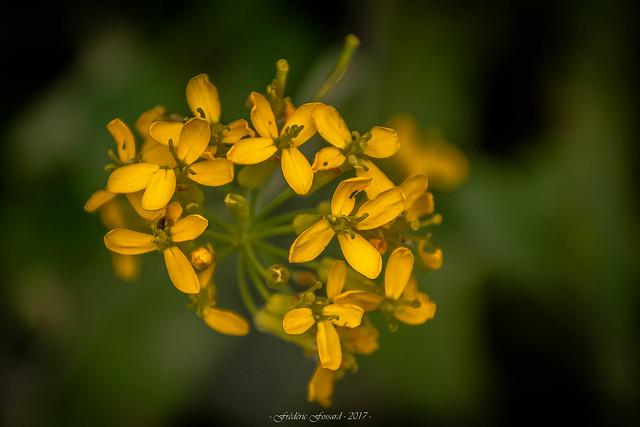 Bouquet de Douceur