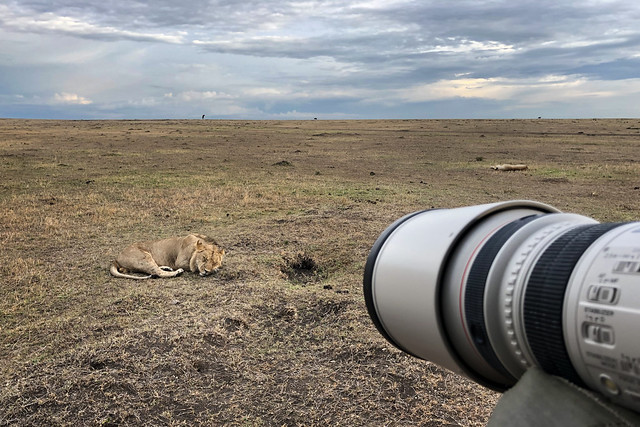 Behind the Scenes: Photographing the Cheli Pride Lions