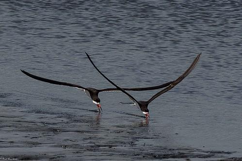 Synchronized skimming (Explored)
