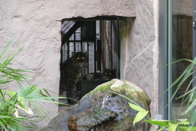 57-Fischkatzen Ratu und Singha