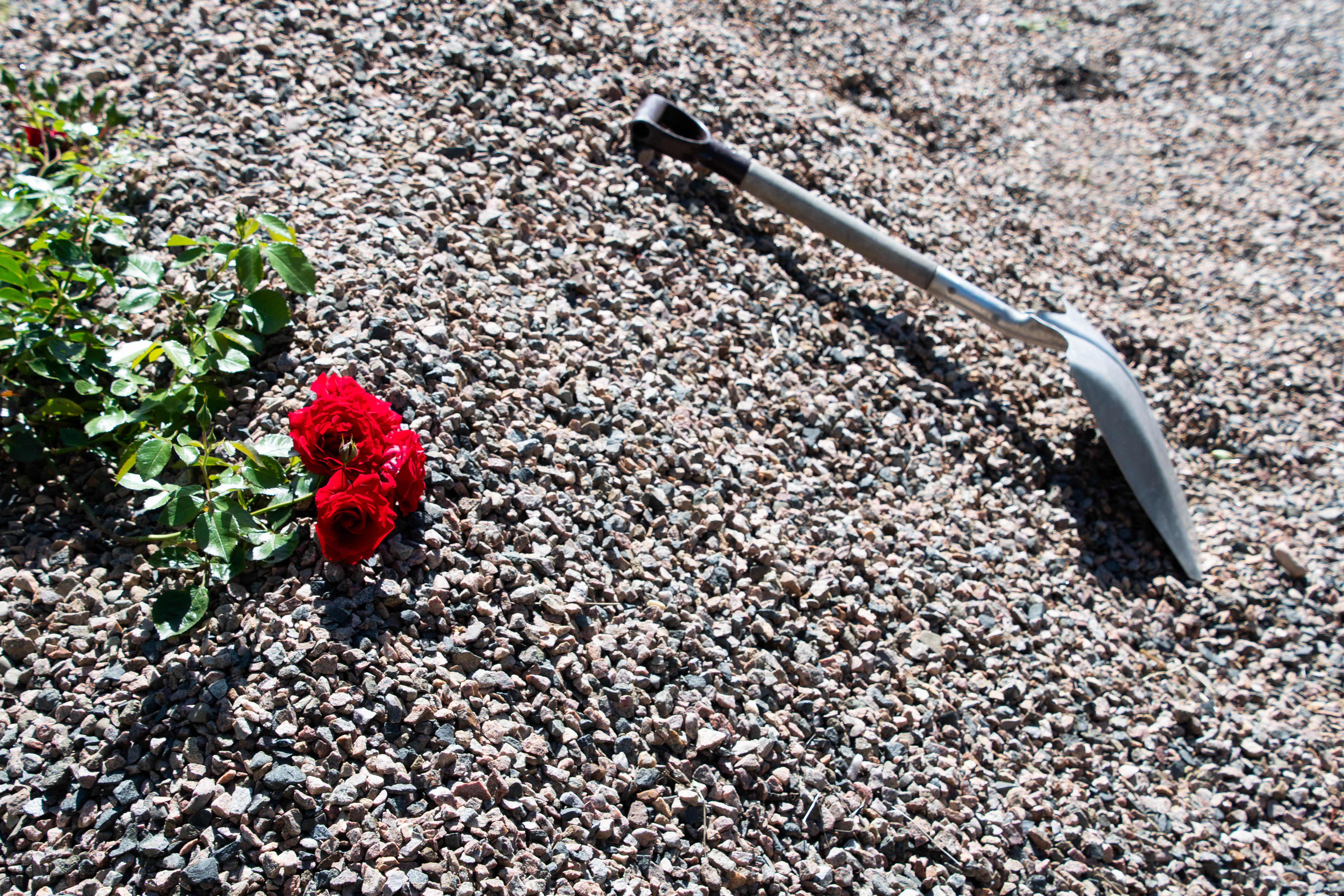 shovel and roses.jpg