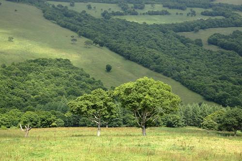 岩手県 葛巻町 袖山高原 nature natureonly landscape plateau green tree trees