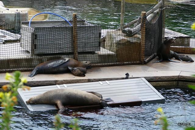 01-Seelöwen mit Nachwuchs