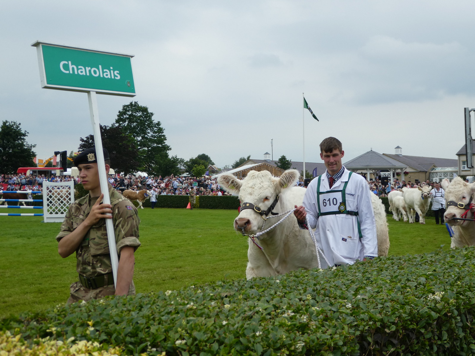 Grand cattle Parade, Great Yorkshire Show, Harrogate