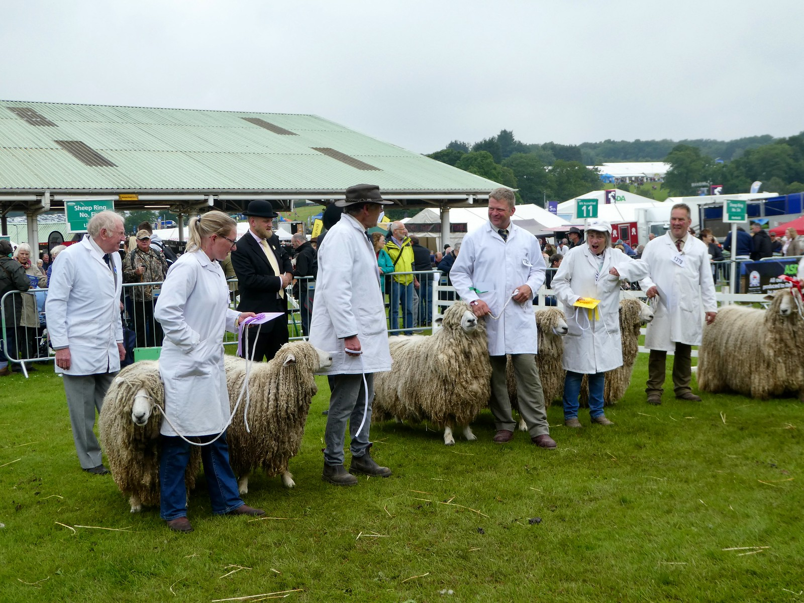 Sheep classes, Great Yorkshire Show, Harrogate