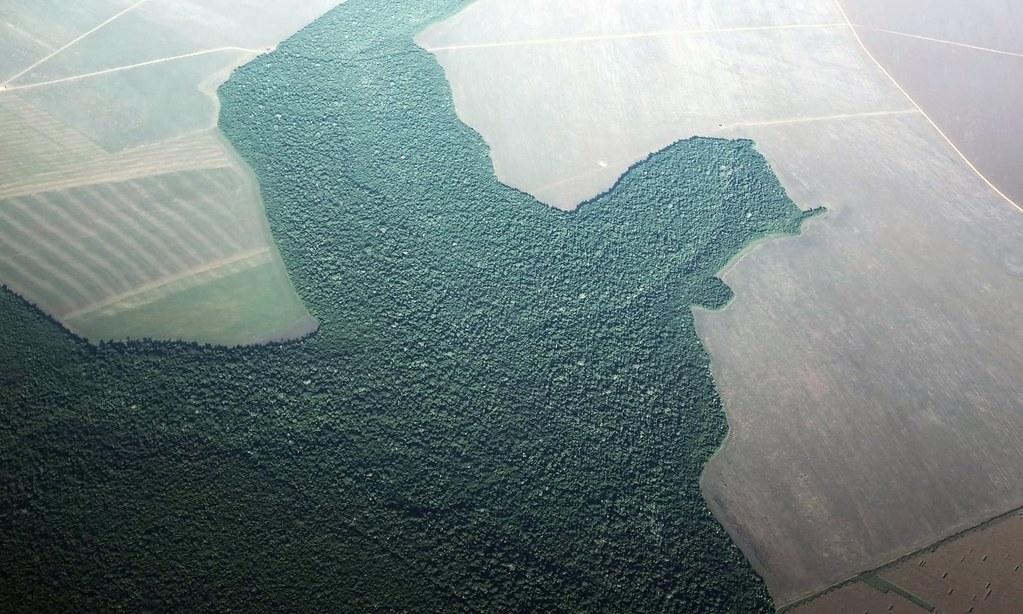淪為農田的亞馬遜雨林。(圖片來源:Nacho Doce / Reuters)