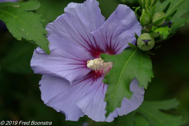In our garden,