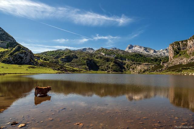 Paisaje con vaca y reflejos - Landscape with cow and reflections