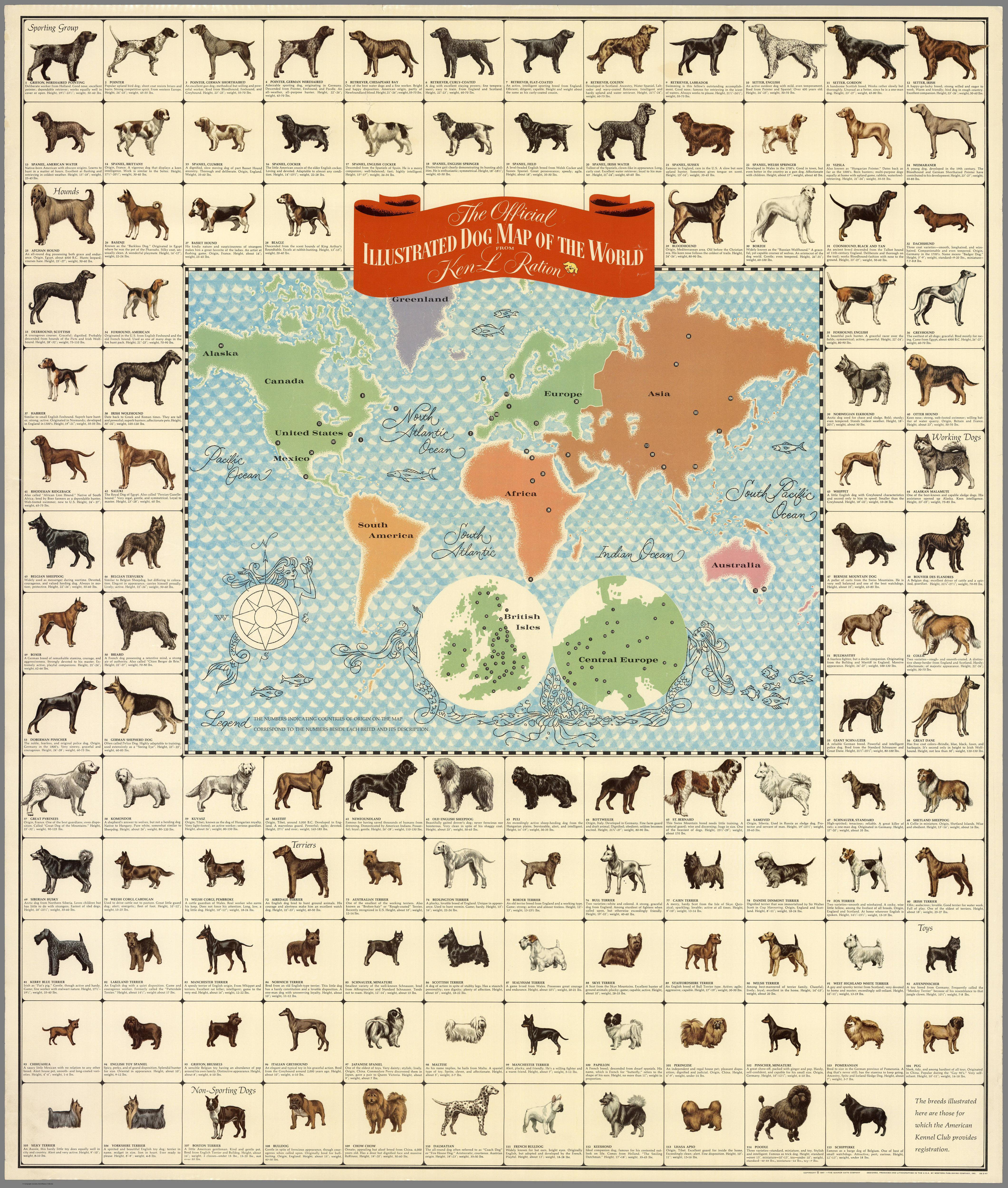 Dogs of all nations map - Vivid Maps